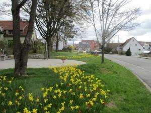Narzissenblüte in Denkendorf